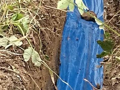 wykopany rów z niebieską folią